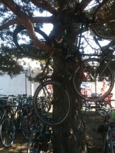 Bikes in trees